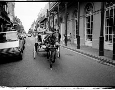 New Orleans Horse and Carriage